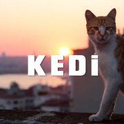 Kedi Review