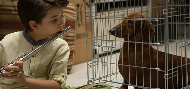 Wiener Dog (2016) DVD Review