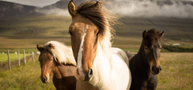 6 Of The Best Equine Films For Horse Lovers